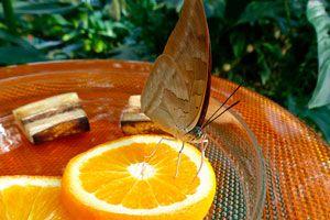 Ilustración de Cómo Atraer Mariposas al Jardín