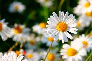 Ilustración de Cómo Elegir las Flores del Jardín