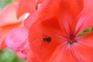 Ilustración de Cómo Eliminar los Insectos de las Plantas
