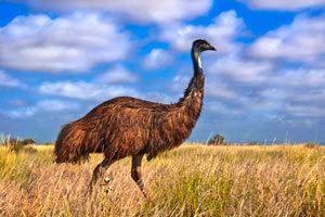 Ilustración de Propiedades del Aceite de Emú