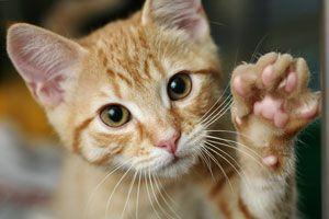 Ilustración de Cómo Cuidar a un Gato