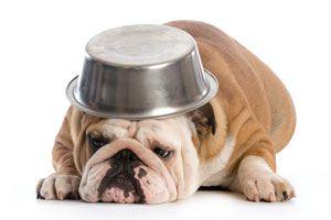 Ilustración de Cómo hacer Golosinas para Perros Sin Cocción