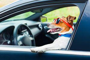 Ilustración de Cómo Viajar con Mascotas