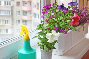 Ilustración de 5 Plantas Ideales para el Verano