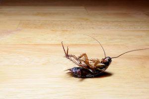 Ilustración de Cómo Eliminar las Cucarachas