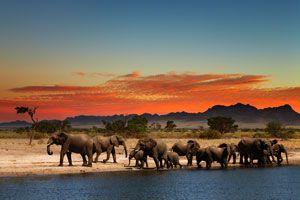 Ilustración de Cómo Recorrer África en un Año