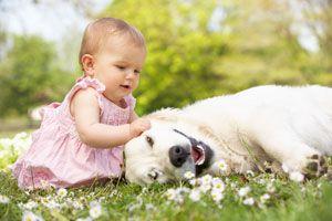 Ilustración de Las 4 Mejores Razas de Perros para Niños