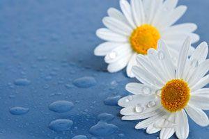 Ilustración de Las Supersticiones de las Flores más Populares