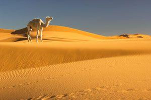 Ilustración de Consejos para Viajar al Desierto