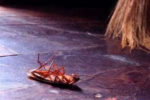Ilustración de Cómo Evitar Pestes en el Hogar