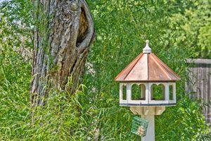 10 ideas simples para embellecer el jardín. Cómo decorar el jardín con ideas simples. Consejos simples para decorar el patio
