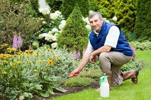 Ilustración de Cómo Mejorar el Jardín en 3 Pasos