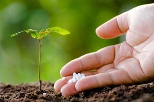 Ilustración de Cómo Fertilizar el Jardín