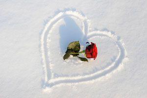Ilustración de Cómo Proteger las Rosas en Invierno