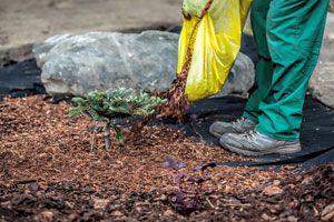 Ilustración de Cómo Crear Mantillos para Cuidar las Plantas en Invierno