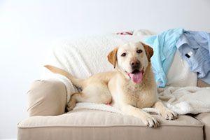 Ilustración de Cómo Eliminar el Olor a Perro