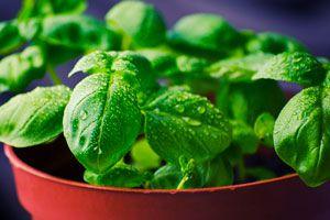 Cómo mejorar las energías de la casa con hierbas. Aromáticas para sacar las malas energías. Cómo evitar las malas energías con hierbas