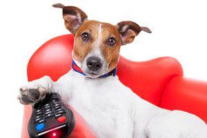 Ilustración de Entretenimientos para Mascotas