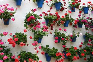 Ilustración de Cómo crear huertas dentro del hogar y plantar tus hierbas favoritas