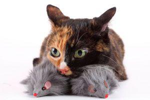 Ilustración de Consejos para ahorrar en el cuidado de la mascota