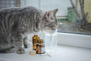 Ilustración de Cómo Darle una Pastilla a un Gato