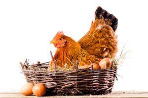Ilustración de ¿Qu&eacute son los Huevos Astrol&oacutegicos?