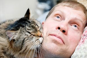 Ilustración de ¿Cómo Demuestran Cariño los Gatos?