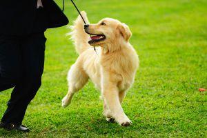 Ilustración de Cómo Adiestrar a un Perro