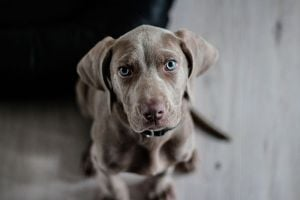 Ilustración de Cómo Tratar a un Perro Ansioso