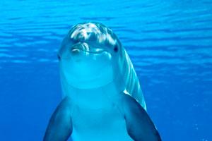 Ilustración de Vacaciones con los delfines en Los Cabos, México