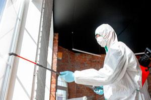 Ilustración de Sentritech Madrid o cómo eliminar plagas de termitas y carcoma de manera definitiva