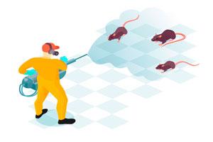 Ilustración de Cómo ahuyentar ratas en casa: todo sobre el servicio de control de plagas